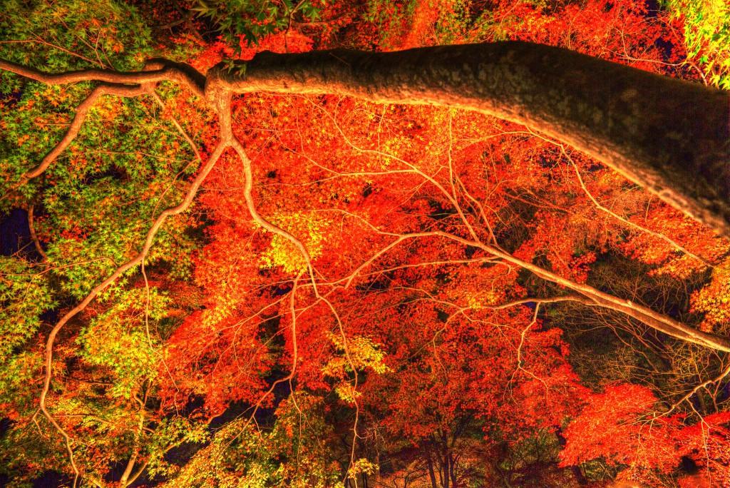 EOS5Dmk3_2015_11_29_41553_絵画風2_s
